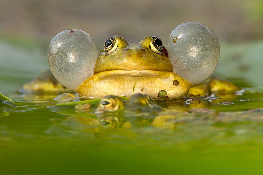 Photograph Dressed to Impress  by Roeselien Raimond on 500px