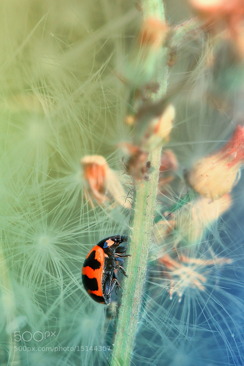 Photograph have fun with ladybug by adrian yyen on 500px