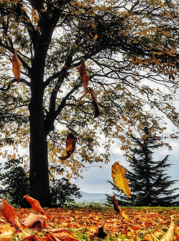 Photograph Autumn Fall by Sarah Hughes on 500px