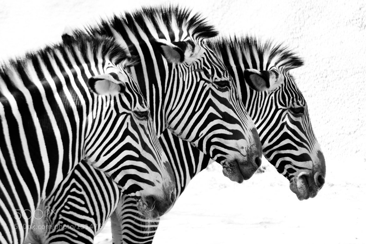 Photograph Stripes of life by Daniel Padilla on 500px