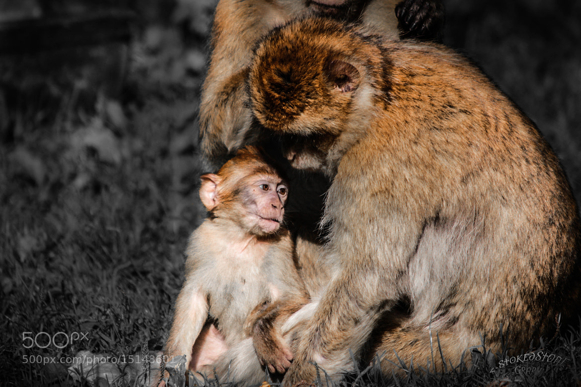 Photograph monkey affairs by Ralf Steinbrück  on 500px