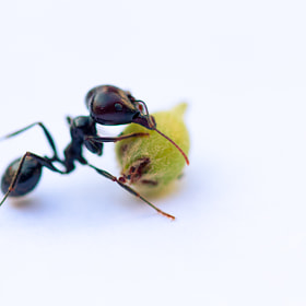 Ant by Anita Stargardt (astargardt)) on 500px.com