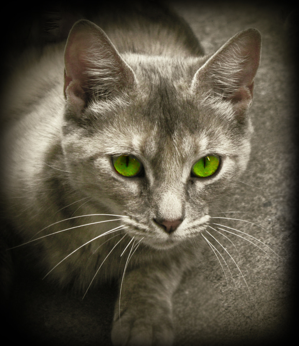 Photograph Nine Lives by Dipen Dave on 500px