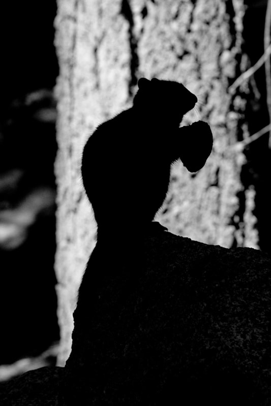 Photograph Silhouette by Kira Stackhouse on 500px