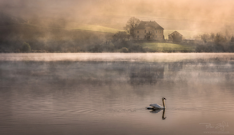 Morning search by Peter Zajfrid on 500px.com