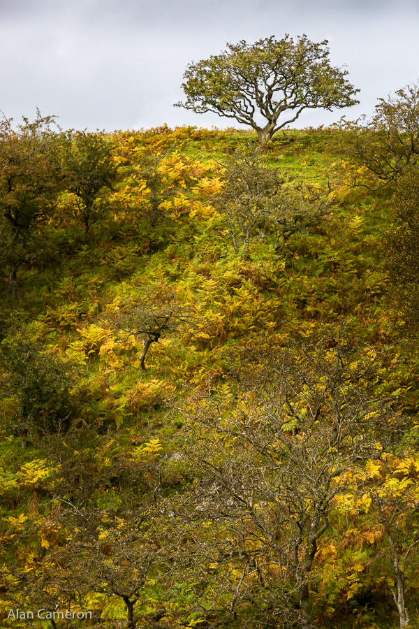 Photograph Autumn In the Leadhills by Alan Cameron on 500px