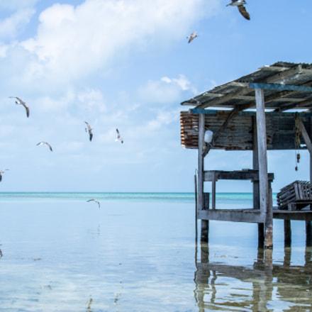 Aquatic Outpost