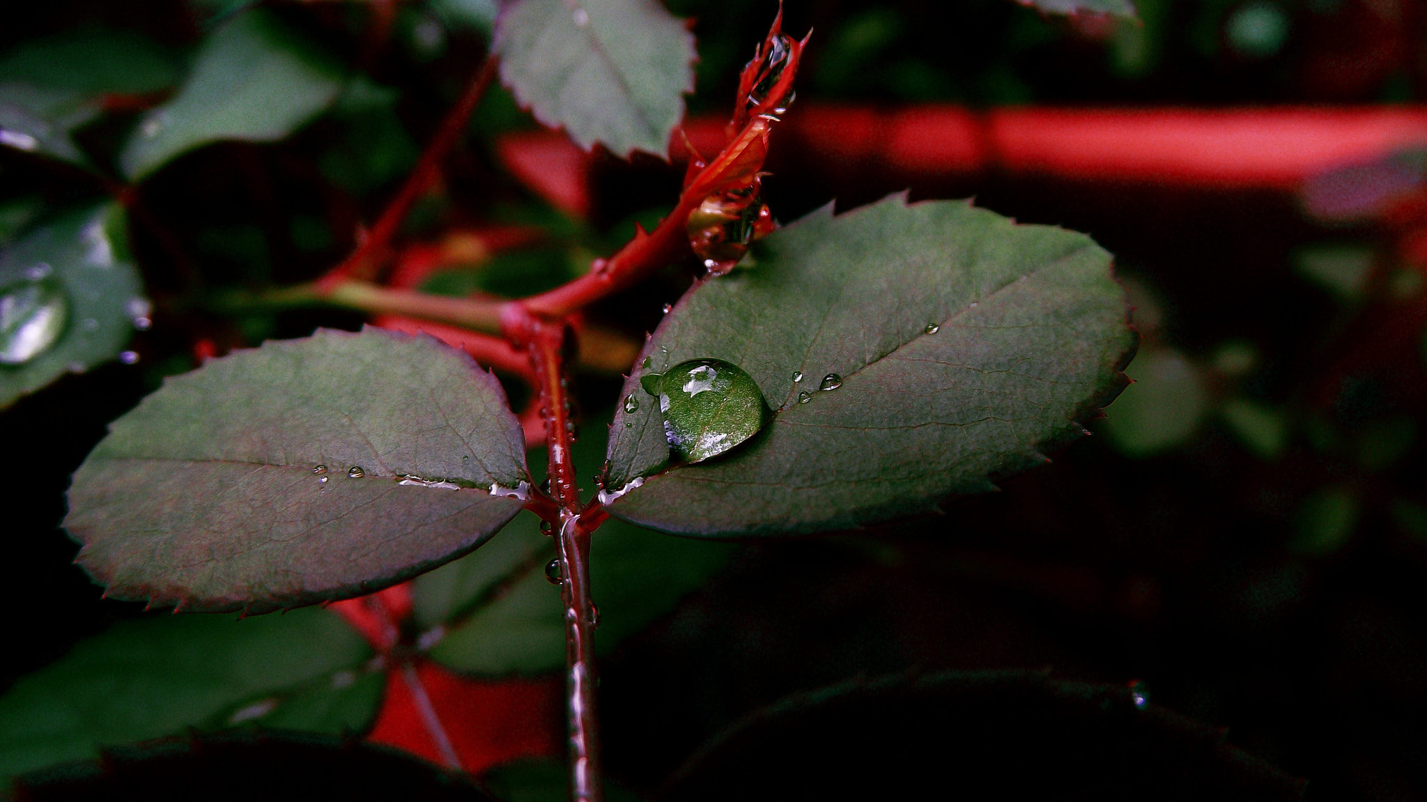 Photograph water drop by Abhilash S on 500px