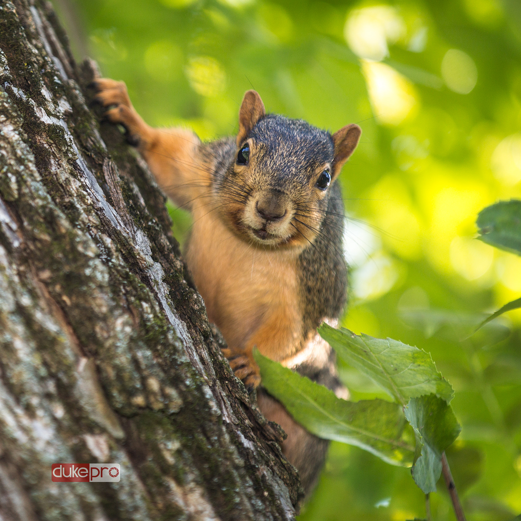 Photograph Squirrel On The Tree  by DukePro Studio on 500px