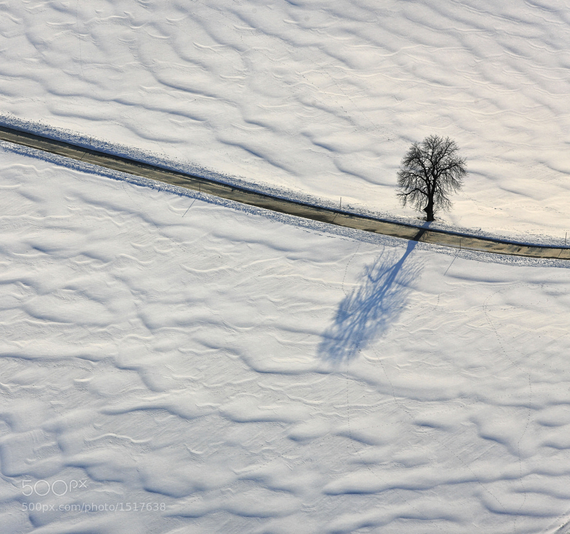 Photograph Lonely tree by Klaus Leidorf on 500px