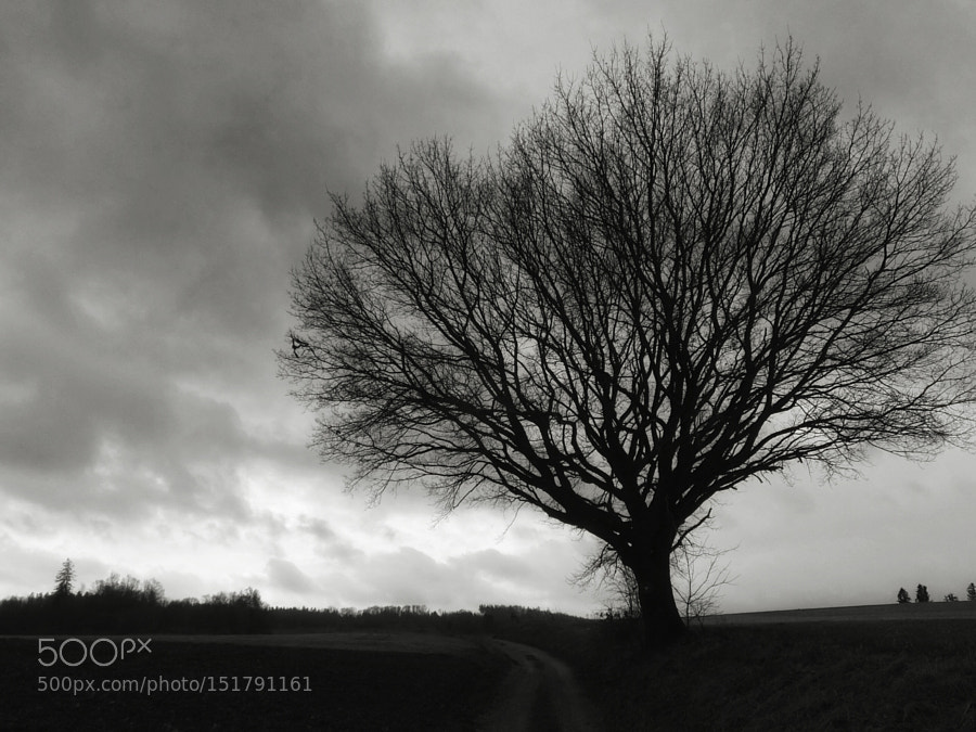 Roots growing skywards