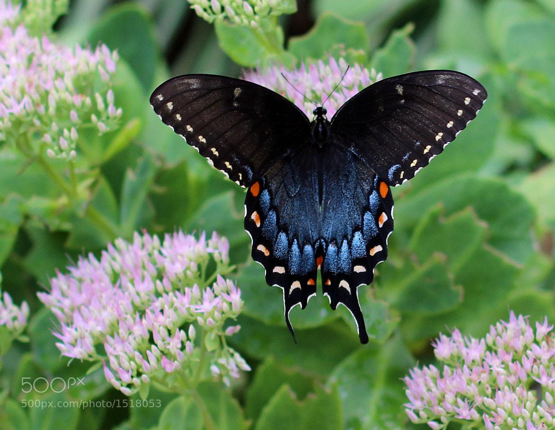 Photograph Butterfly in the Garden by Matthew S. Schwartz on 500px