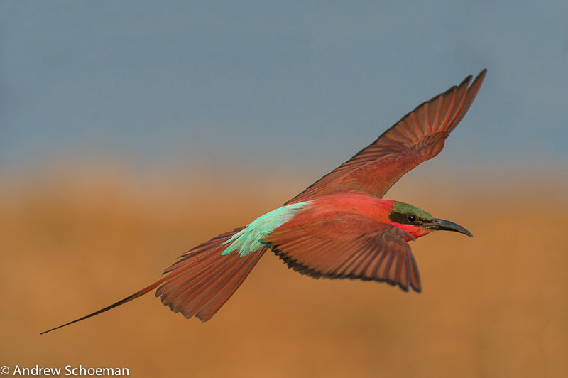 Photograph In Flight ! by Andrew Schoeman on 500px