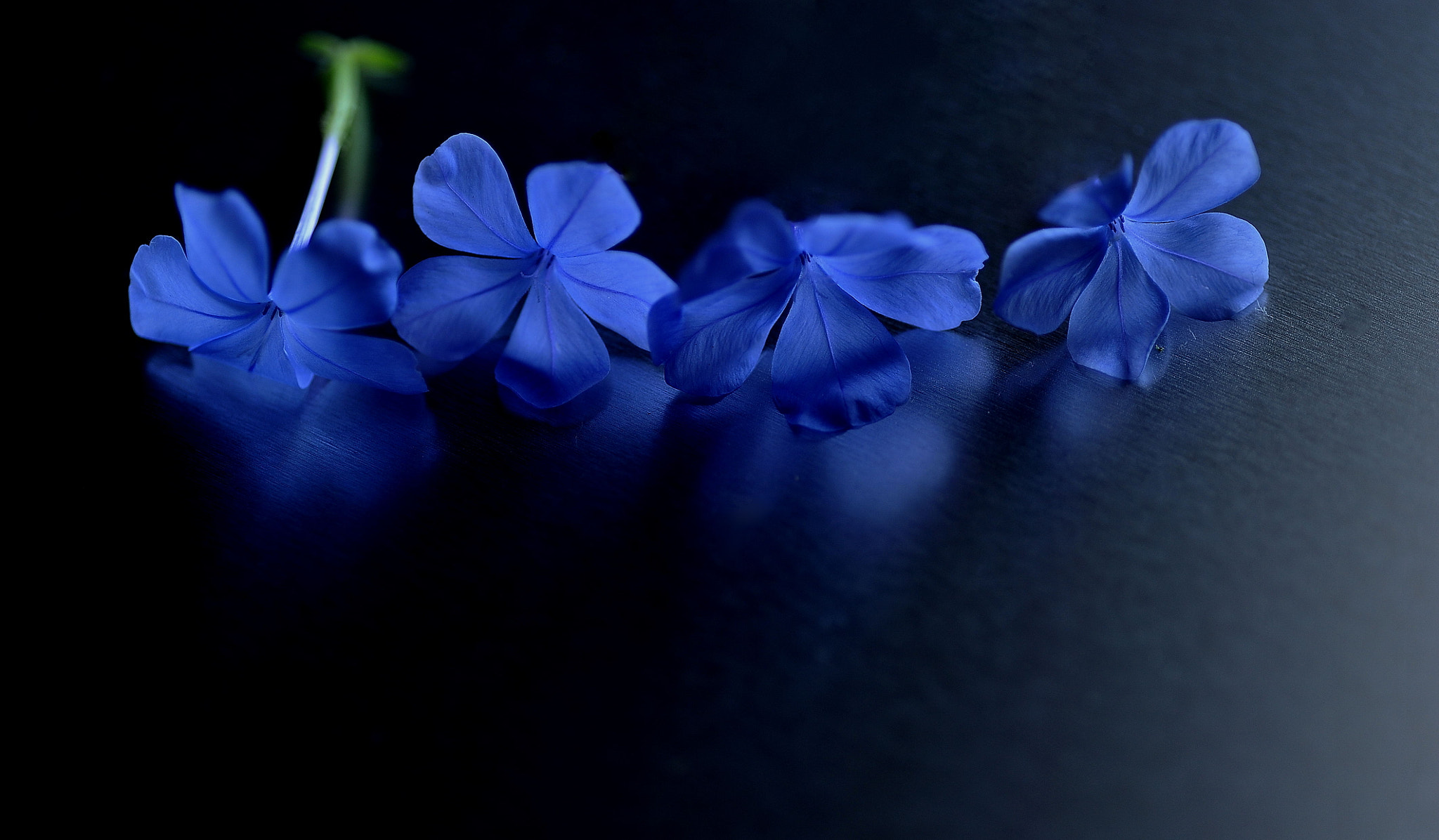 Photograph The same period by Lafugue Logos   on 500px