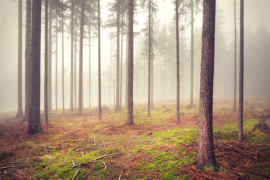 Photograph Just a Forest by Kilian Schönberger on 500px