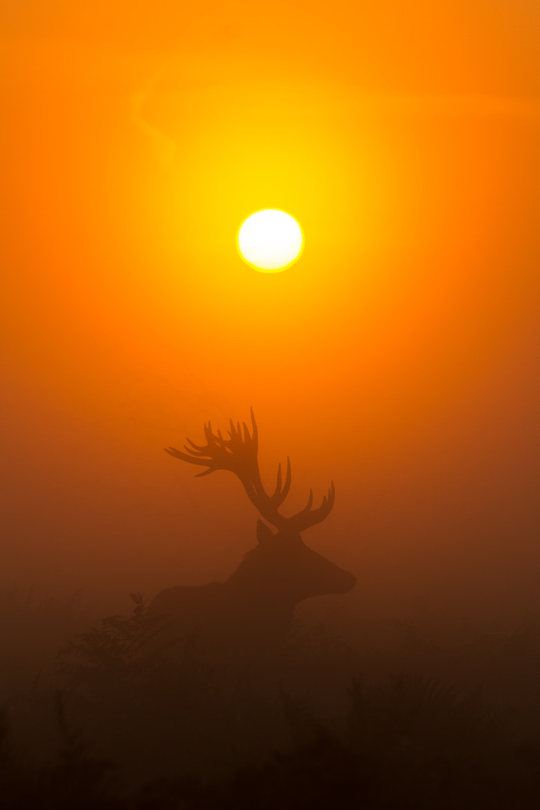 Photograph Sun & Stag by Stephen Darlington on 500px