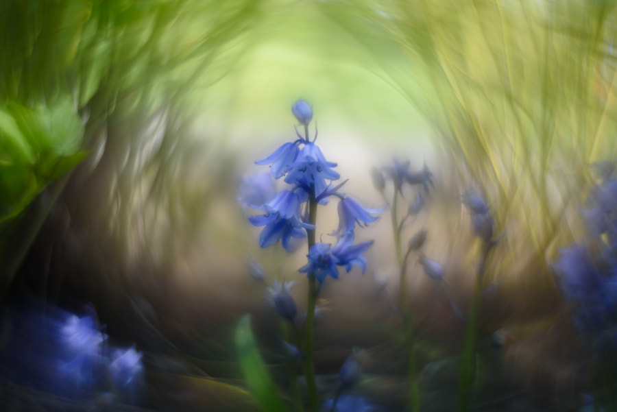 Fairy Flowers by Ryan Lee Chow on 500px.com