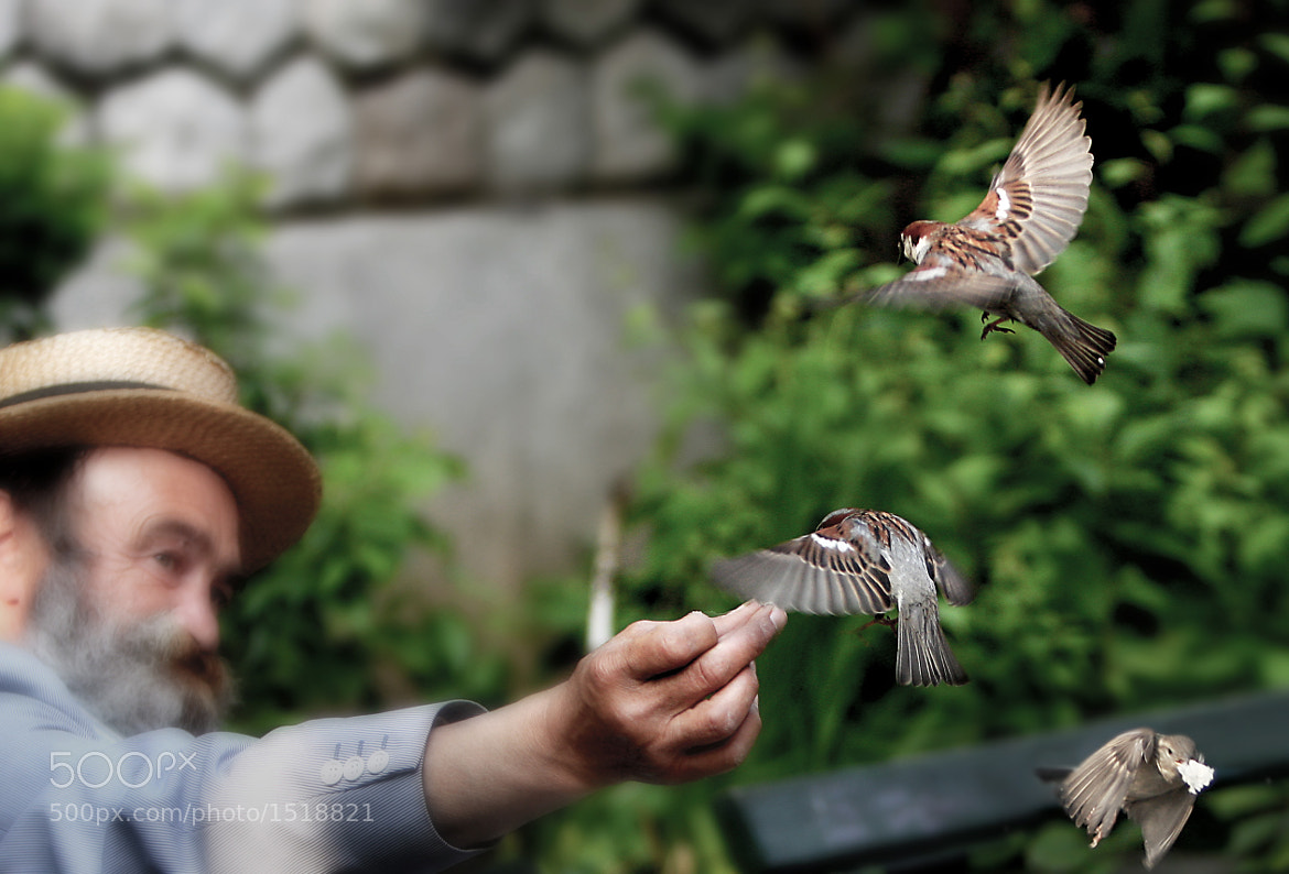 Photograph Feeding birds by Edu    on 500px