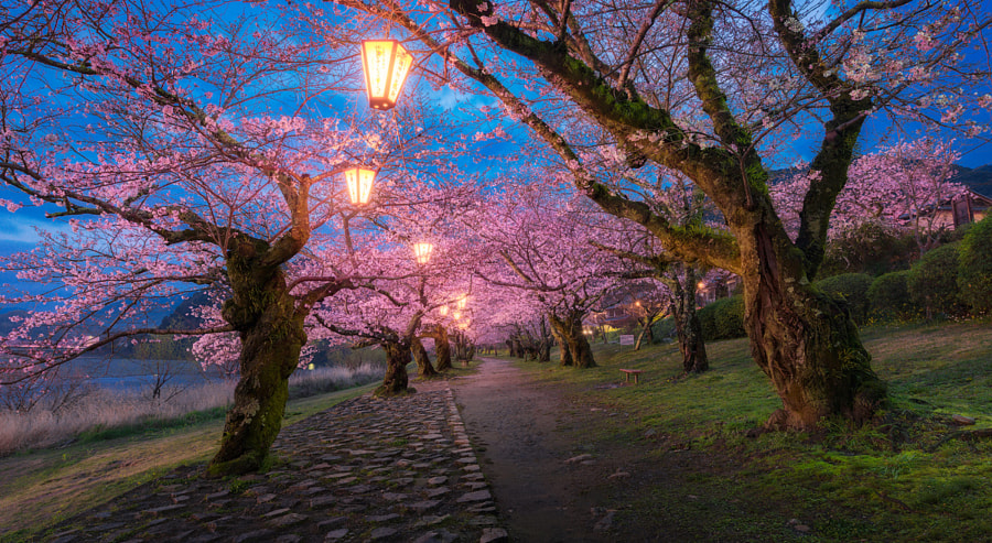 Blossom Road by Pete Wongkongkathep on 500px.com