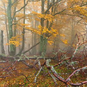 Fall symphony by Bogdan D Photographer