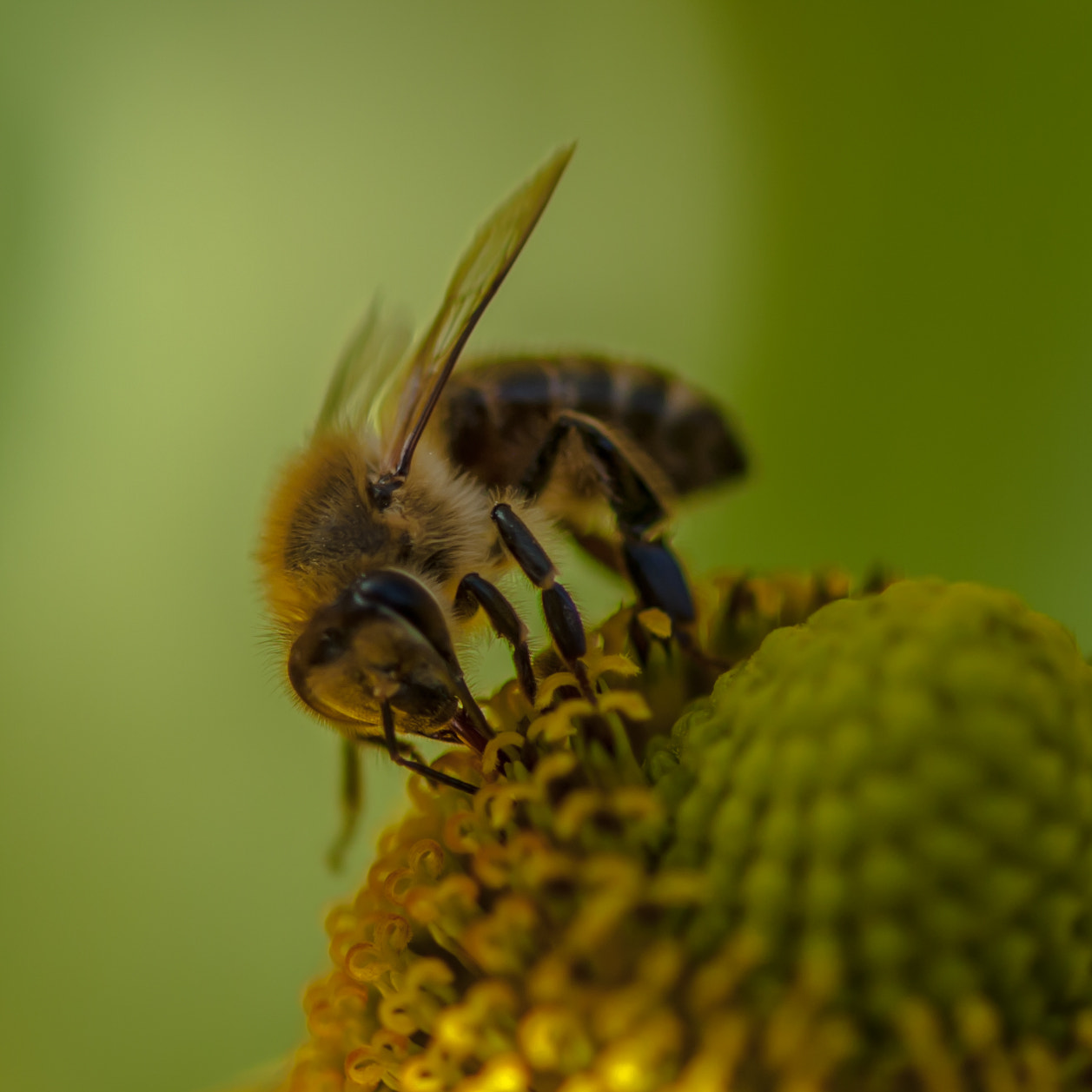 Photograph Bees by jorgen norgaard on 500px