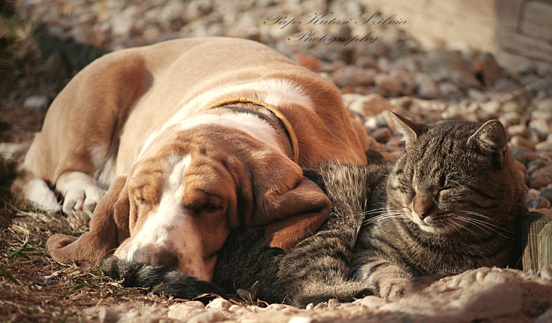 Photograph cat pillow-dog blanket II. by Szilvia Pap-Kutasi on 500px