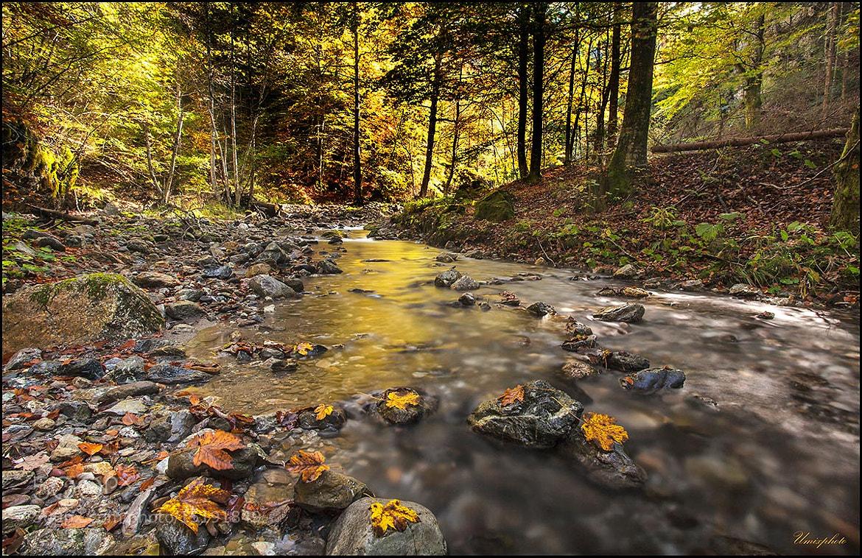 Photograph Golden River by Jaro Miščevič on 500px