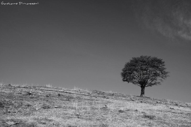 Photograph Dark stain by Gaetano Pimazzoni on 500px