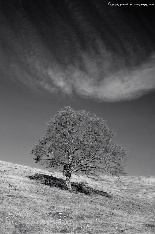 Photograph When a tree meets a cloud by Gaetano Pimazzoni on 500px