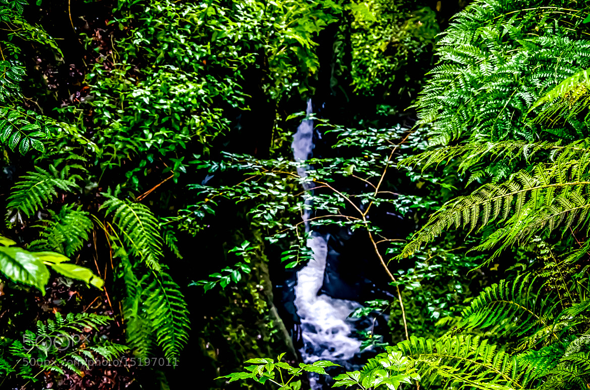 Photograph Lydford Gorge 2 by julian john on 500px