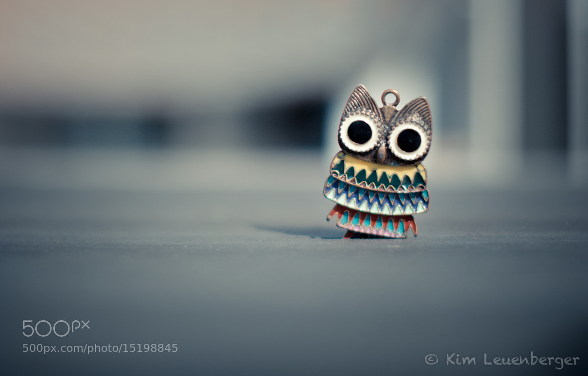 Photograph Hello Owl Owl by Kim Leuenberger on 500px