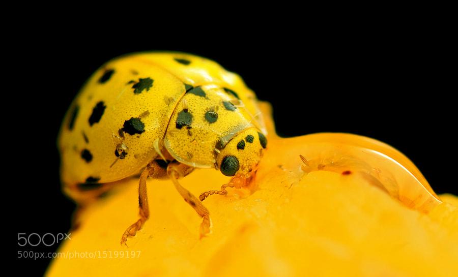Photograph Yellow lady by Mehmet Akyüz on 500px