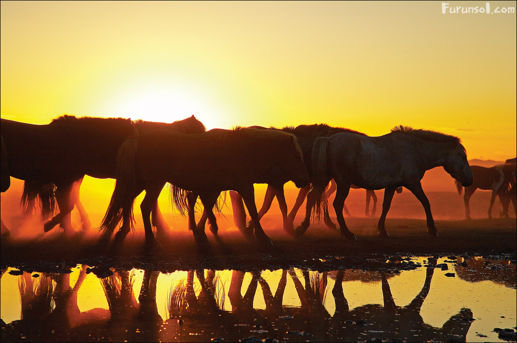 Photograph Horses at sunset by keehwan Kim on 500px