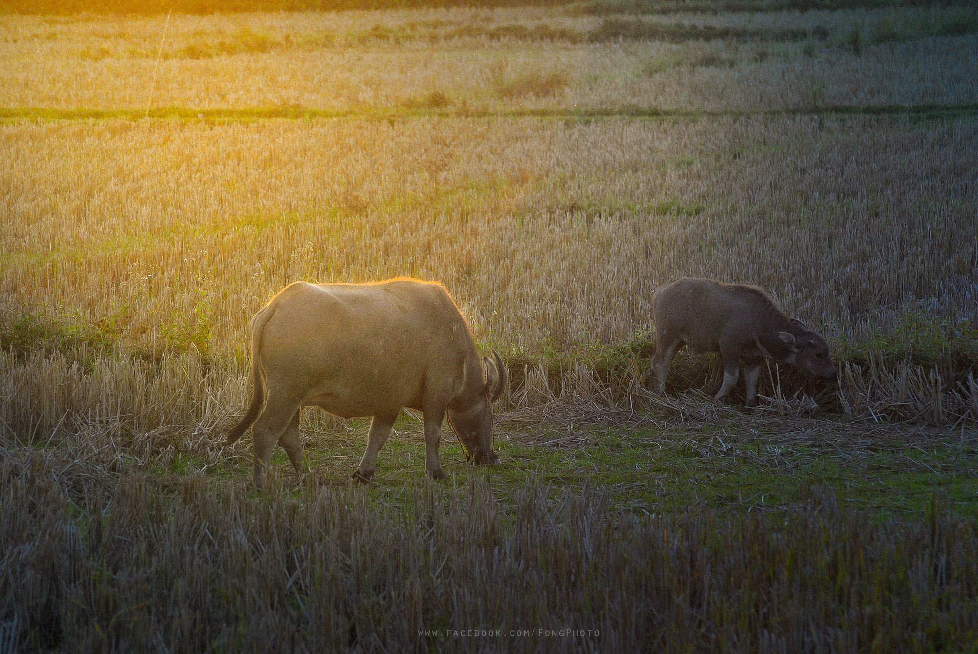 Photograph Buffalo by Leon Fong on 500px