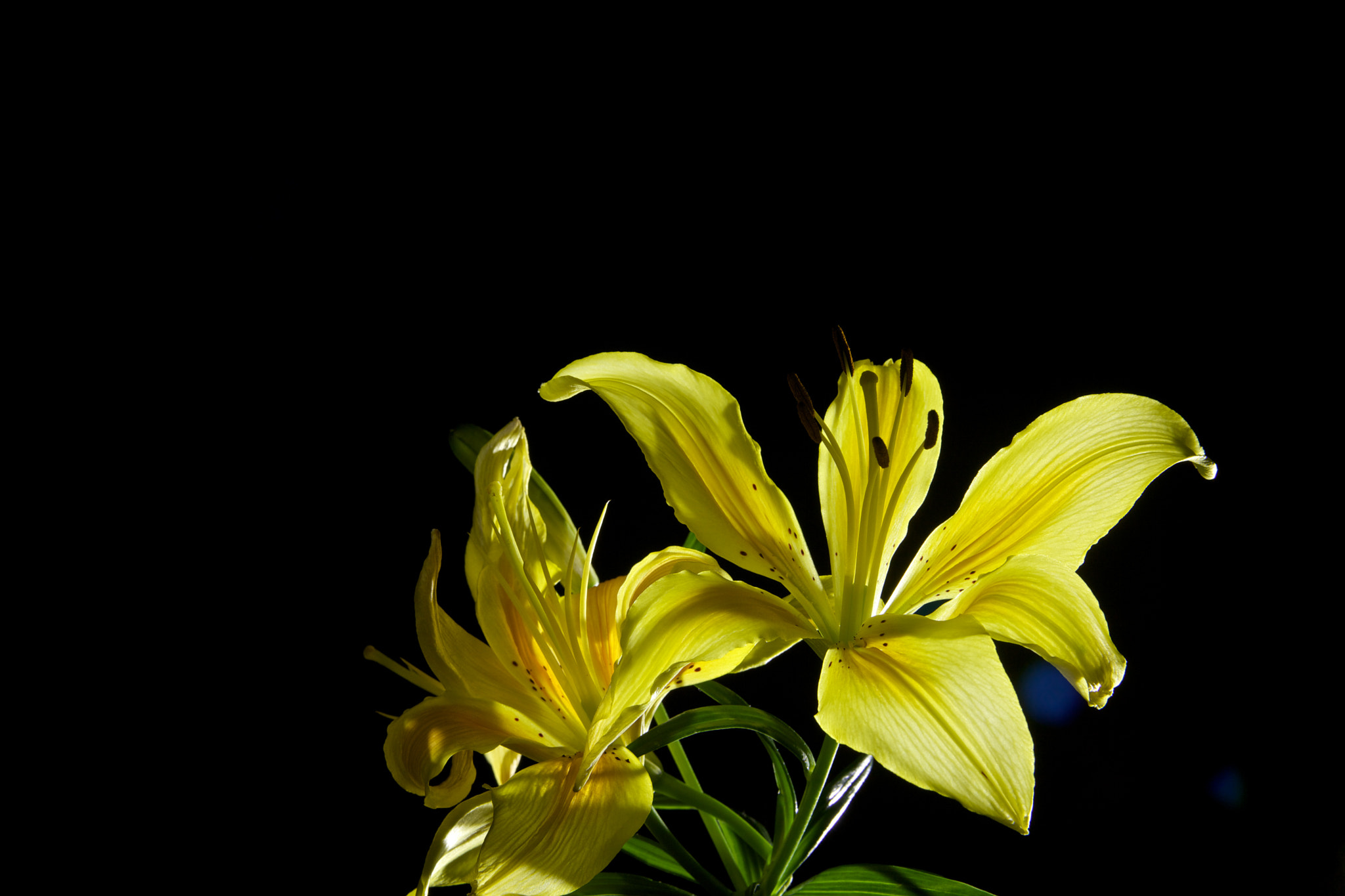 Photograph yellow2 by Sarede Kumaraswamy on 500px