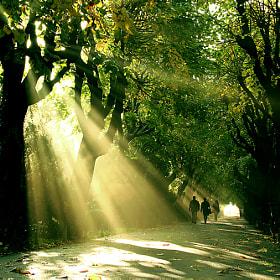 Autumn Elegy by Stefan Andronache (StefanAndronache)) on 500px.com