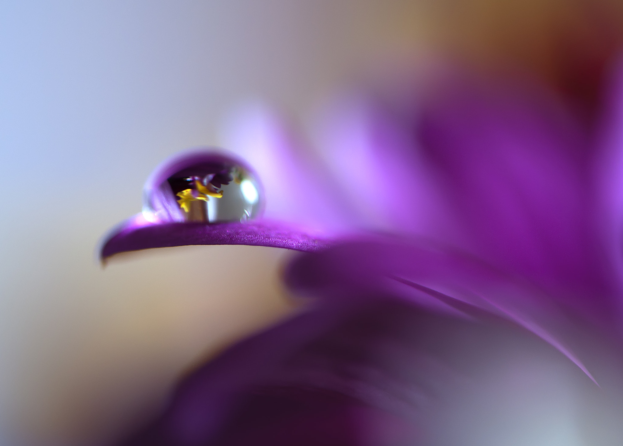 Photograph Drop in purple by Shimon Gabai on 500px