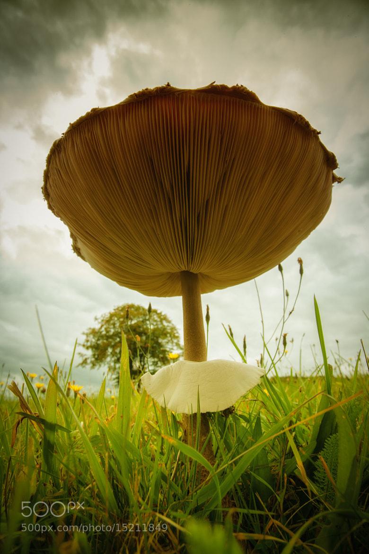 Photograph Mushroom by Florian Klum on 500px