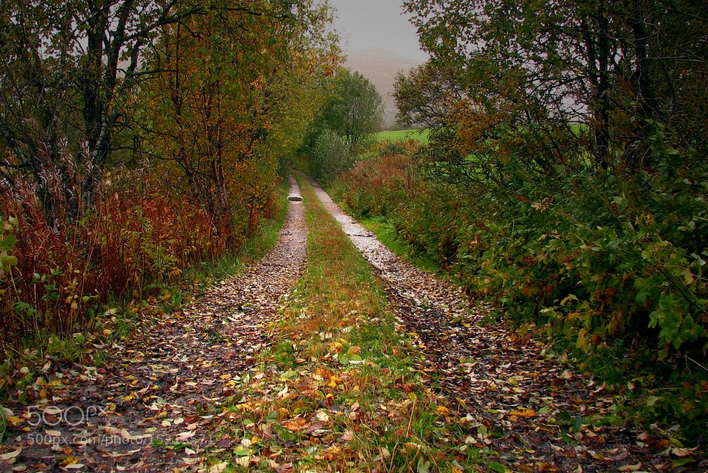 Photograph Autumn leafs. by Kent Lennart Vassdal on 500px
