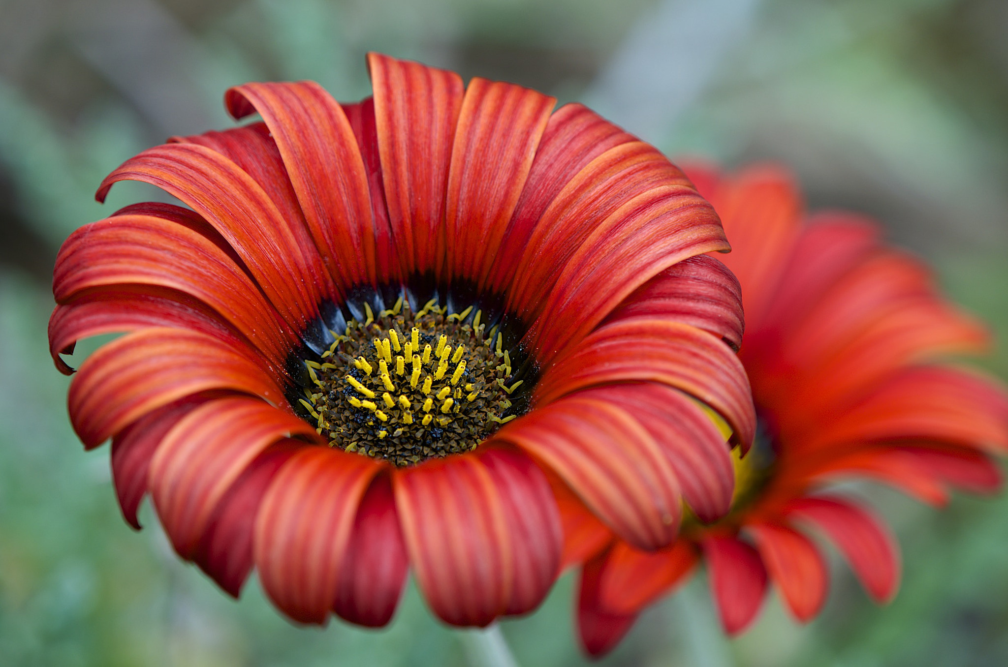 Photograph Red flower by Cécile Gall on 500px