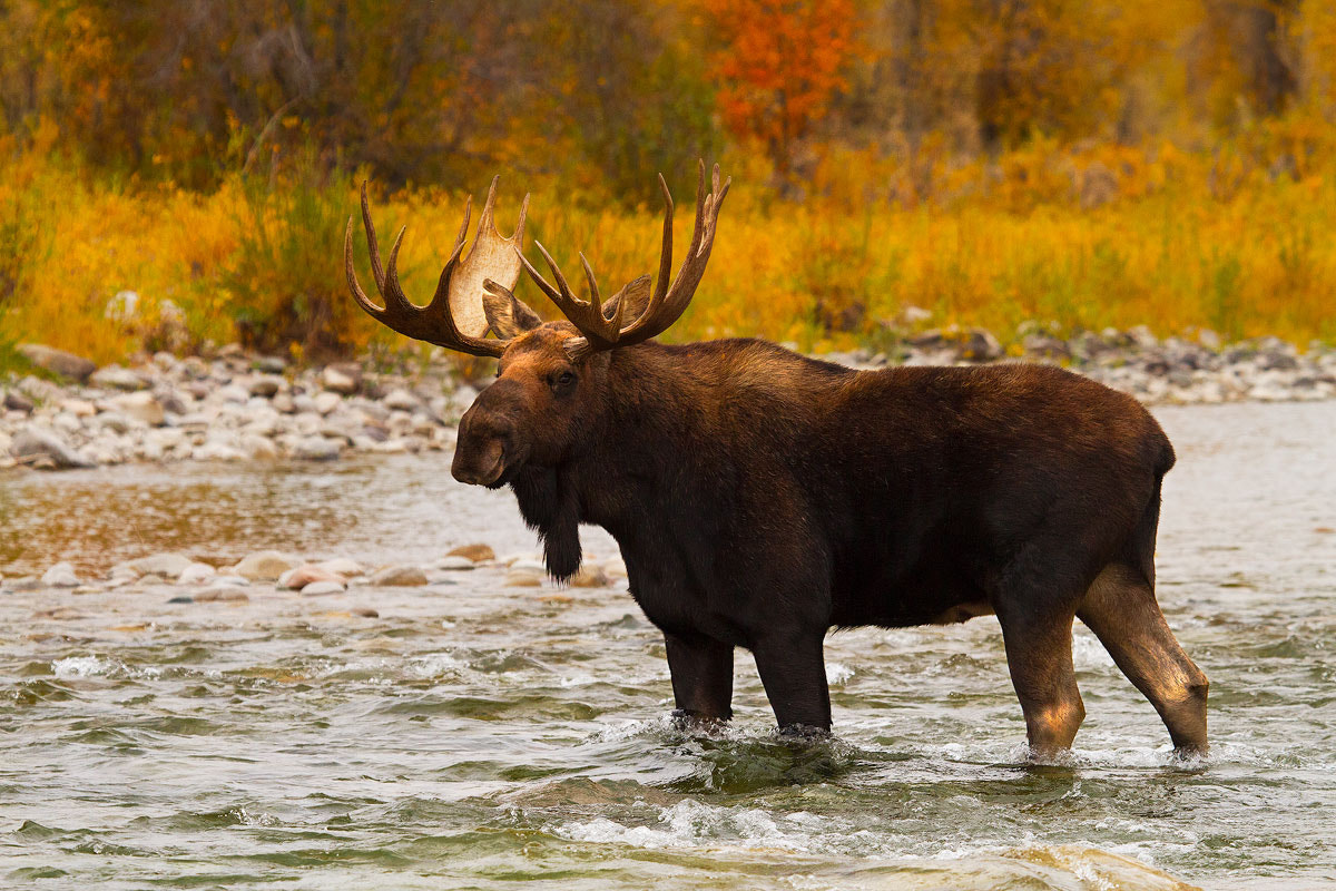 Photograph Aqua Moose by Steven Davis on 500px