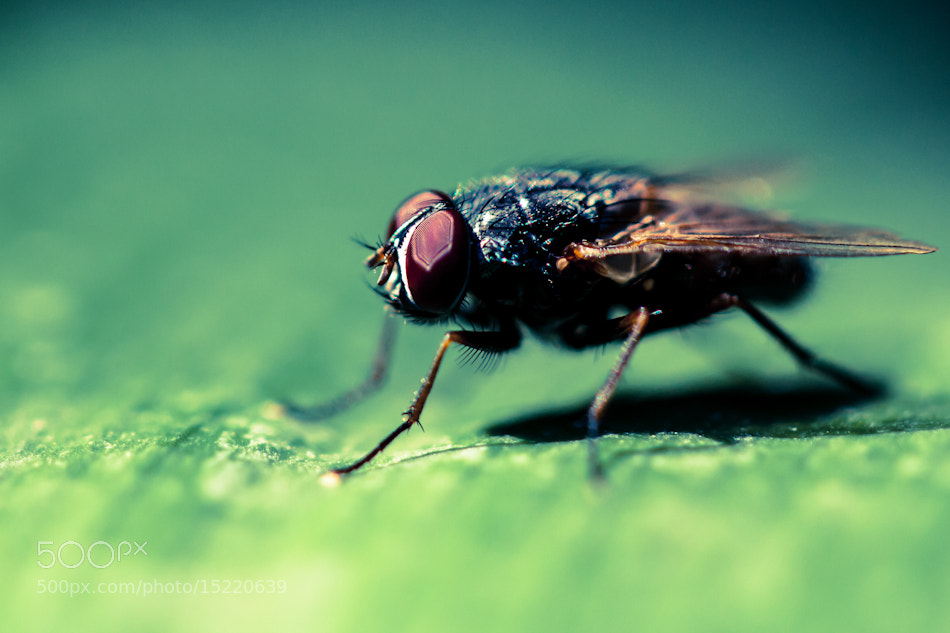 Photograph Fly by Anita Stargardt on 500px