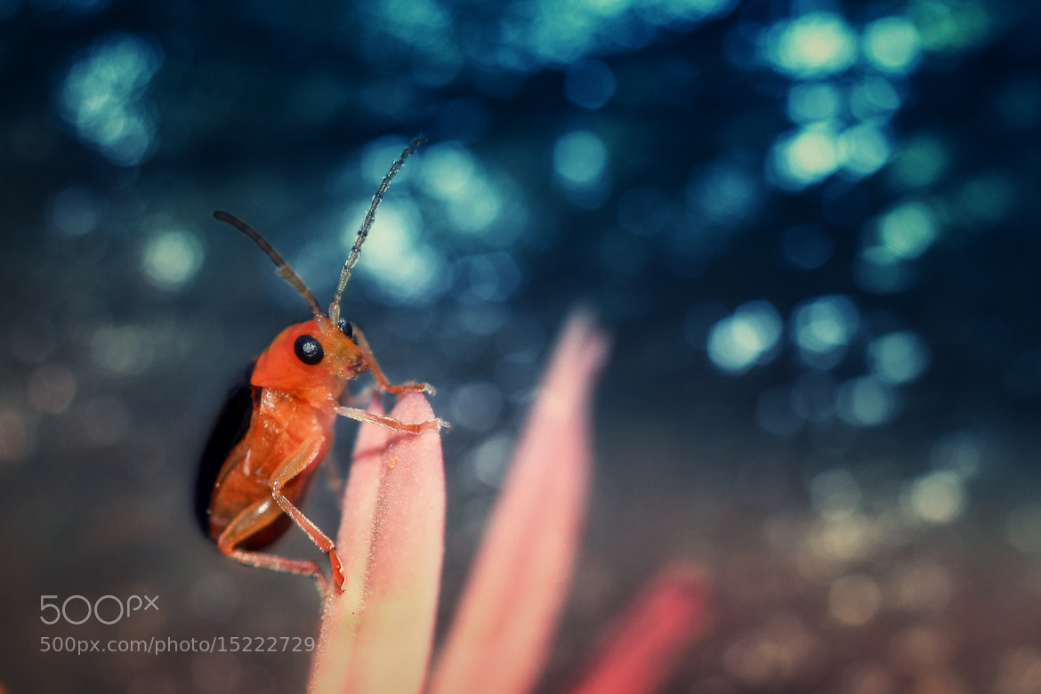 Photograph a bug to the party by adrian yyen on 500px