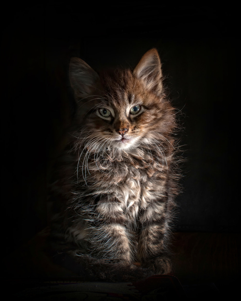 Photograph Archy by Dee McIntosh on 500px