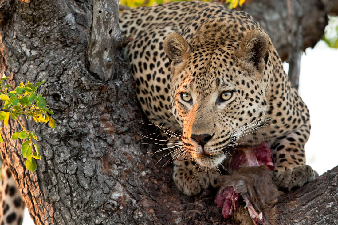 Photograph The Challenger by Marlon du Toit on 500px