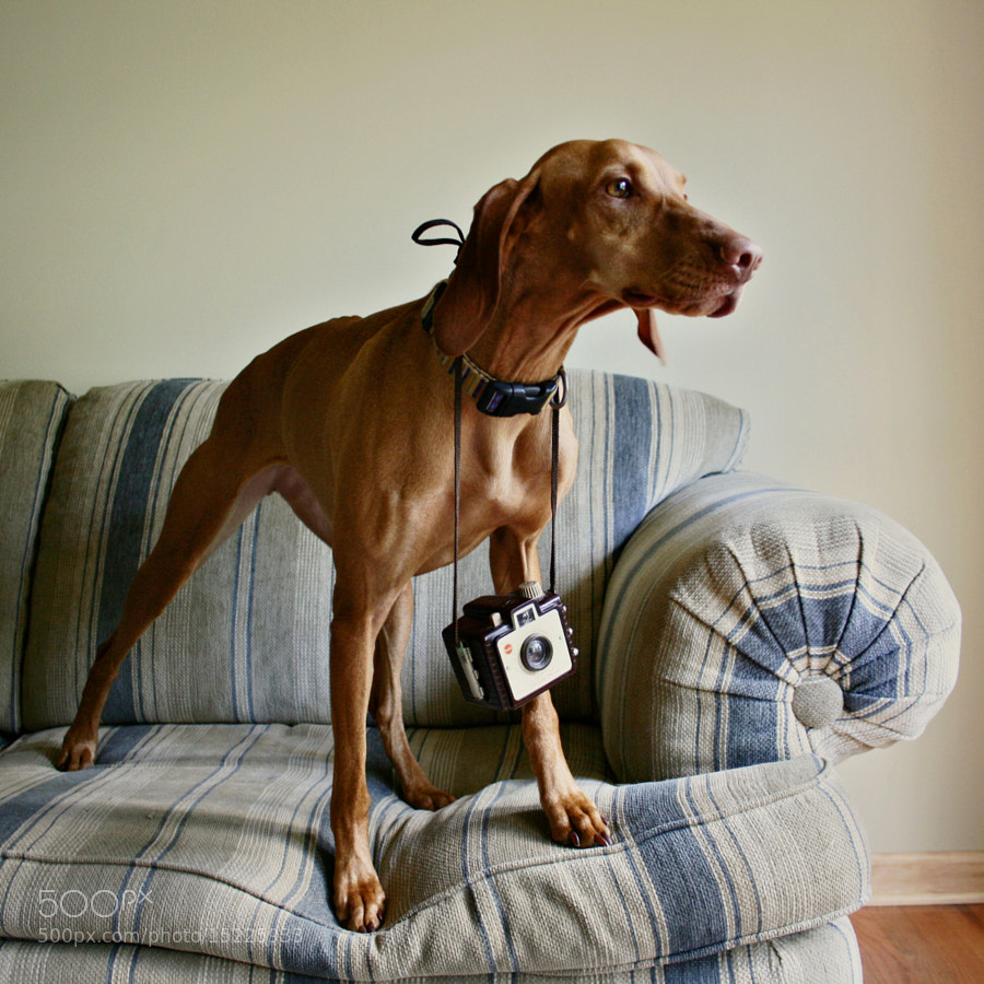 She Thinks She's People - Photographing Pets Essential Tips