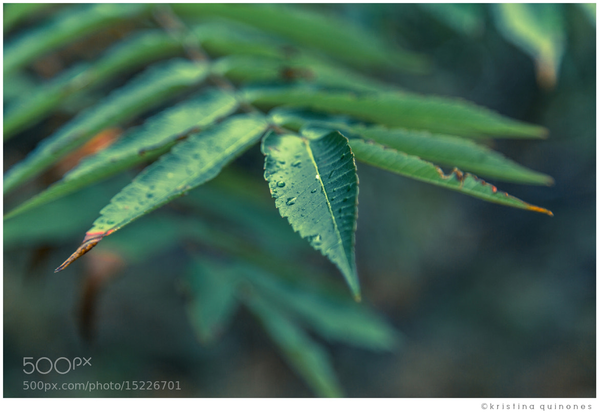 Photograph Foliage by Kristina Quinones on 500px