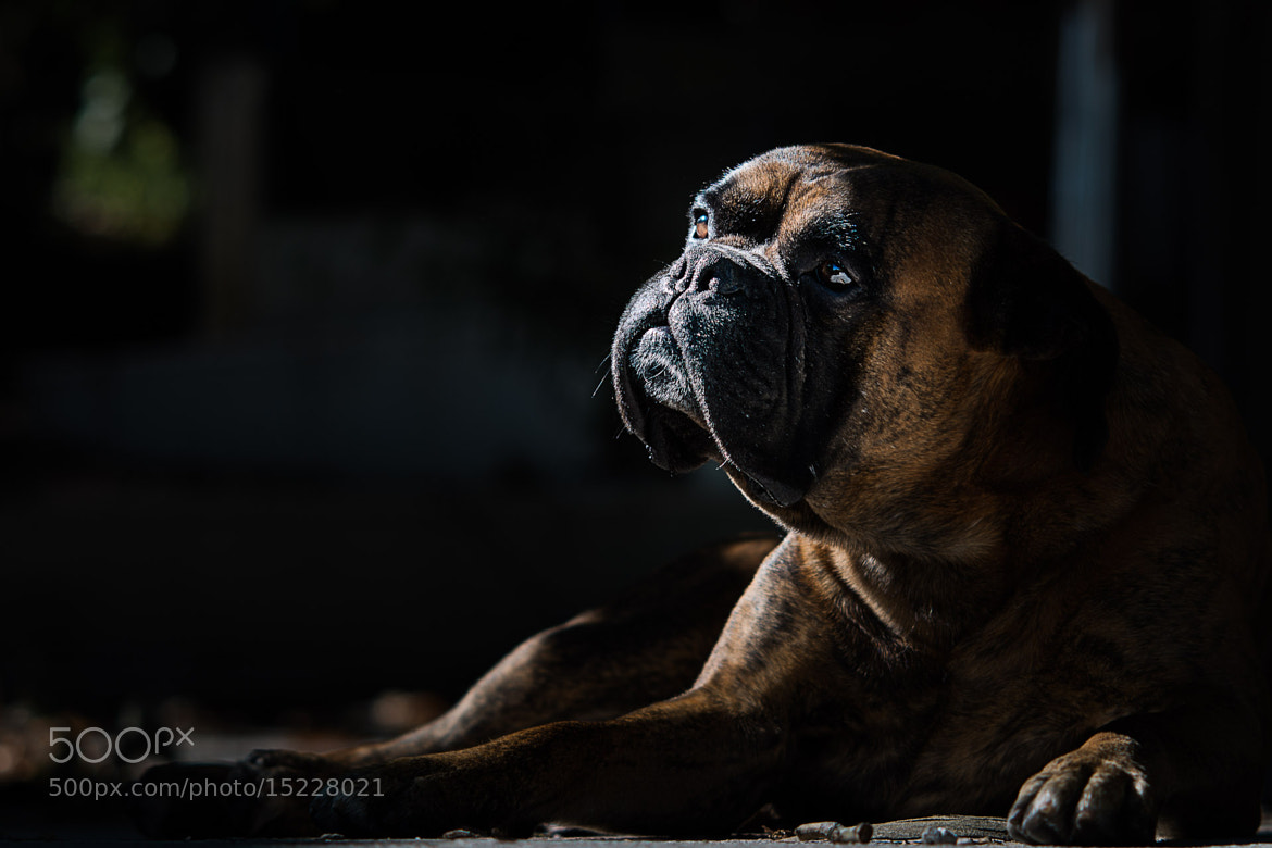 Photograph Zac, the philosopher by João Galamba de Oliveira on 500px