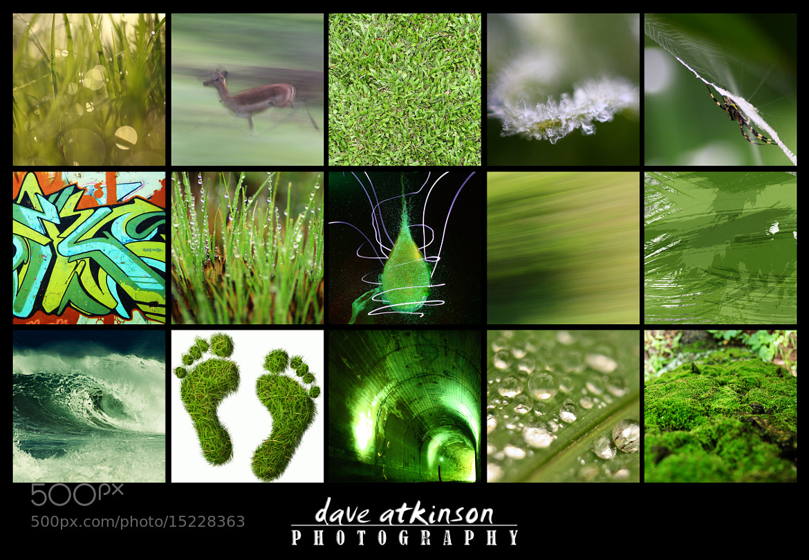 Photograph Green by Dave Atkinson on 500px