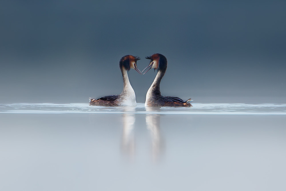 Photograph Courtship by Dale Sutton on 500px